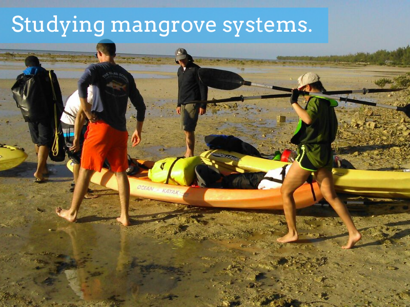 Studying mangrove systems.