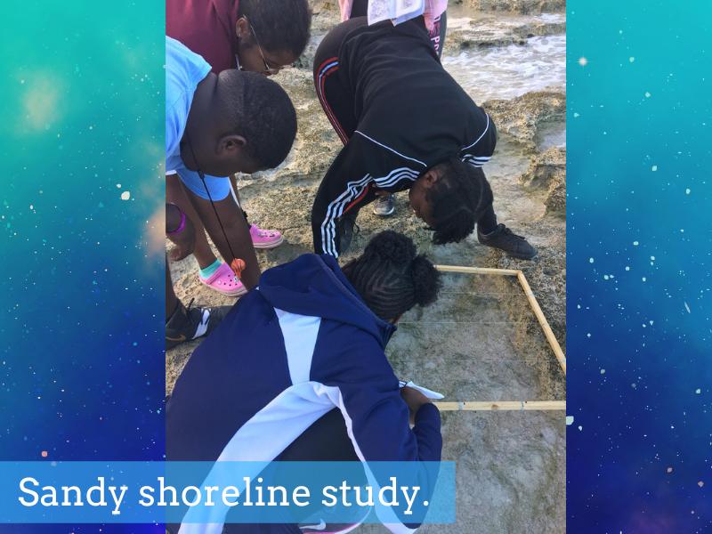 Sandy shoreline study.